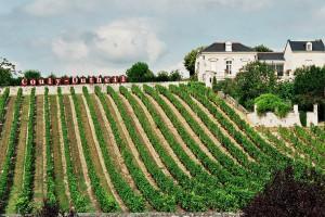Виноградники Луары