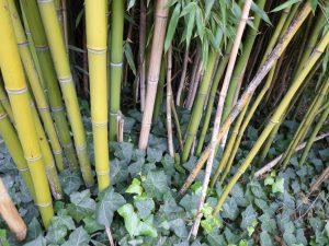 Бамбуковые дома набирают популярность в Испании